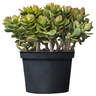 image of liquidation wholesale plant container