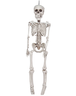 image of wholesale closeout skeleton hanging