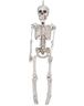 wholesale skeleton hanging